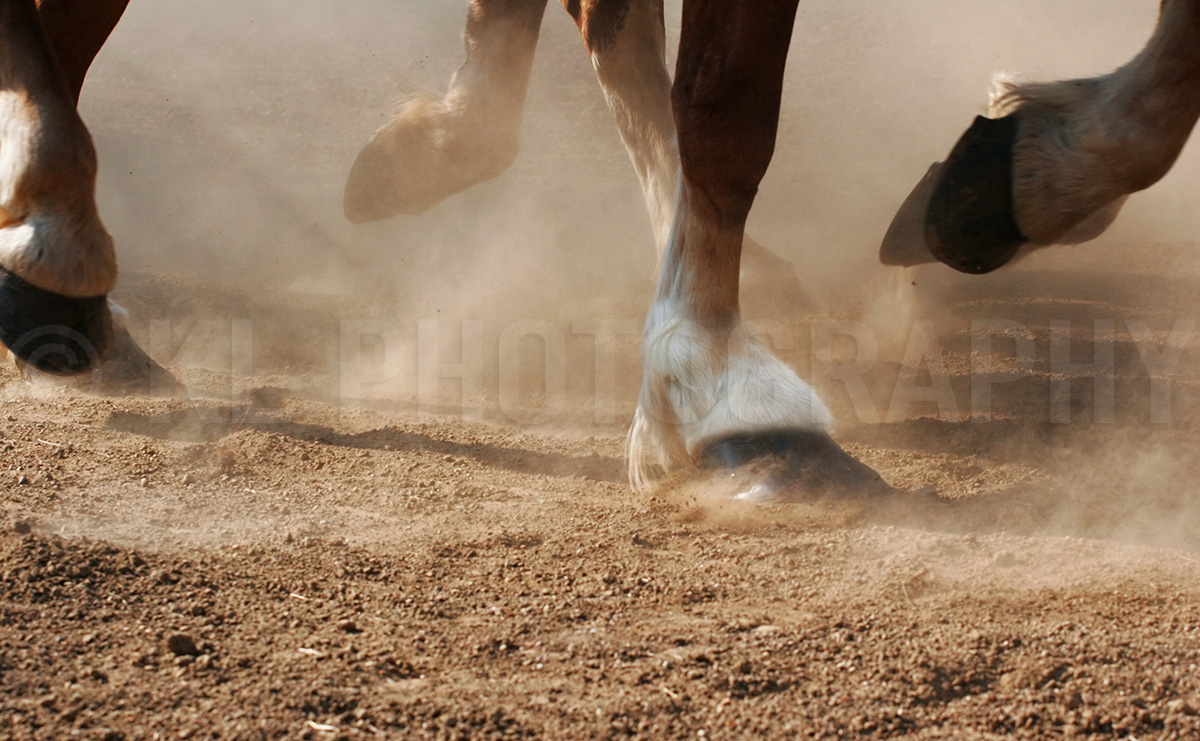 Horse Hooves Running Country scenes gallery - horse hooves